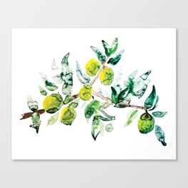 Lime Tree Branch Pattern Watercolor Canvas Print
