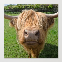 Highland cow nose Canvas Print