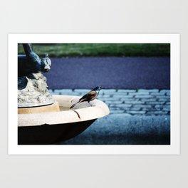 Bird in the Fountain Art Print