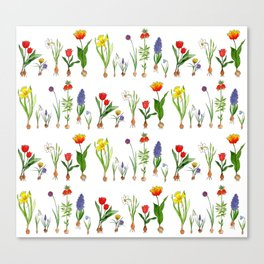 Spring Flowering Bulbs Canvas Print