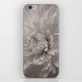 Monochrome chrysanthemum close-up iPhone Skin