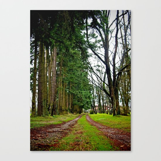 The pathway Canvas Print