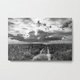 Road to Nowhere - Path in Cornfield Leads to Big Nebraska Sky in Black and White Metal Print