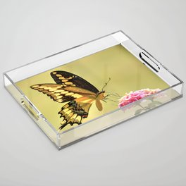 Giant Swallowtail Acrylic Tray