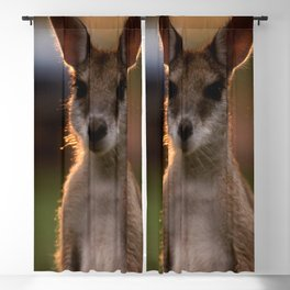 Australia Photography - Cute Baby Kangaroo Blackout Curtain