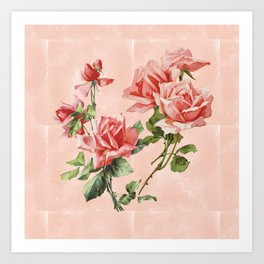 Vintage garden coral red Victorian roses on washed blush pink watercolor Art Print