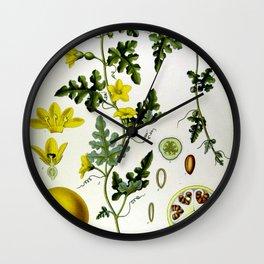 Vintage Illustration Medicinal Plants No 1 Wall Clock