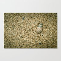 seashell Canvas Prints featuring Seashell by Errne