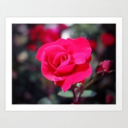 A Rose Says Love Art Print