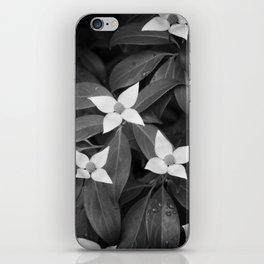 Evergreen Dogwood iPhone Skin