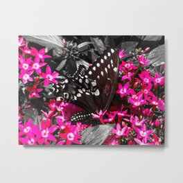Butterflly 5 Metal Print