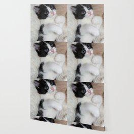 black and white cat Wallpaper