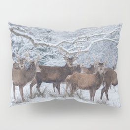 Red deers  from wintry Killarney National Park Pillow Sham
