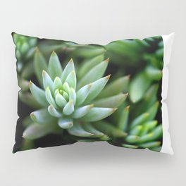 Green cactus Pillow Sham