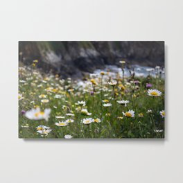 Flowers of daisies in the countryside at sunset Metal Print