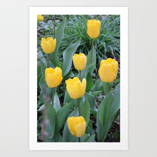 Appledorn Tulips Art Print