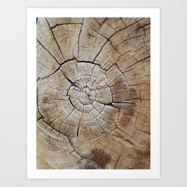 Tree rings of time Art Print