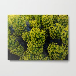 Euphoric Euphorbia Metal Print