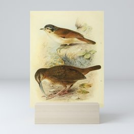 pseudominla atriceps, Short-tailed or Naung Mung Scimitar-Babbler, rimator danjoui14 Mini Art Print