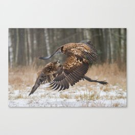Mid-air encounter Canvas Print