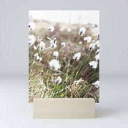 Cottongrass photography Mini Art Print