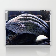 Honeycomb Moray Eel Laptop & iPad Skin