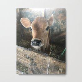 Baby Calf Metal Print
