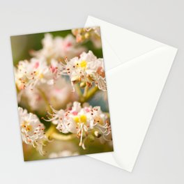 Aesculus chestnut tree blossoms Stationery Cards