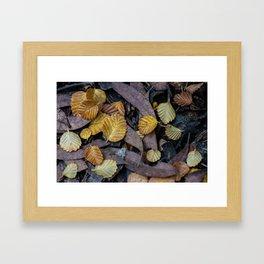 Forest Floor Fagus Framed Art Print
