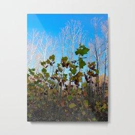 Sycamore Trees Metal Print