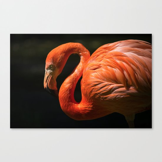 Flamingo photo Canvas Print