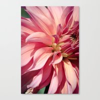 dahlia Canvas Prints featuring Dahlia  by A Wandering Soul