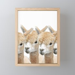 Alpaca Line Up Framed Mini Art Print