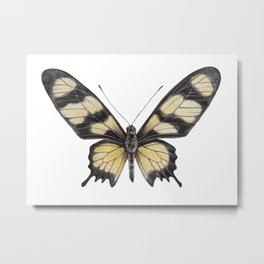 Butterfly | Swallowtail | Amazon Metal Print