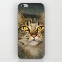maine iPhone & iPod Skins featuring Maine Coon by Pauline Fowler ( Polly470 )