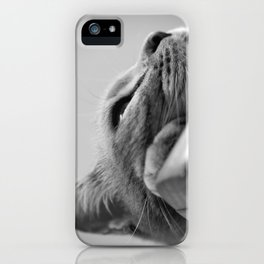 My Cat, Pear-flower on the closet iPhone Case