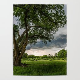 Big Tree - Tall Cottonwood and Passing Storm in Texas Poster