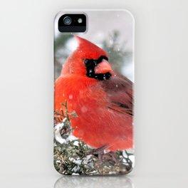 Winter's Beauty Cardinal iPhone Case