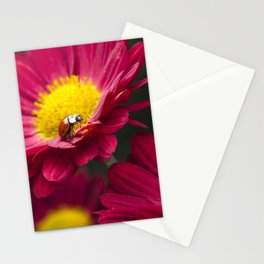 Little Red Ladybug Stationery Cards
