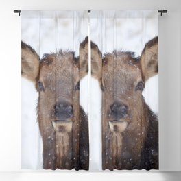 Watercolor Elk Cow 17, Feed Me Seymour Blackout Curtain