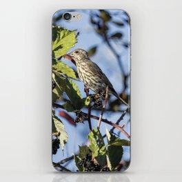 Female Purple Finch iPhone Skin