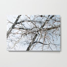 Ice Covered Branches Metal Print