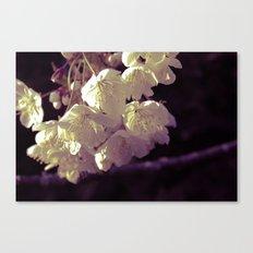 Blossom Canvas Print
