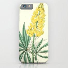 Flower 1435 lupinus sabinianus Yellow Perennial Lupine16 iPhone Case