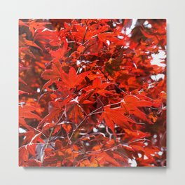Japanese Red Maple Leaves Metal Print