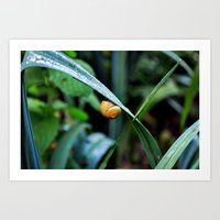 snail Art Prints featuring Snail by  Agostino Lo Coco