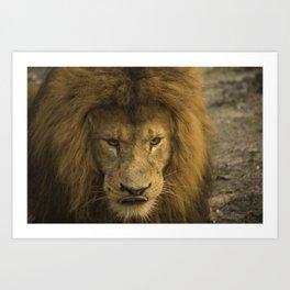 Lion - Time To Eat Art Print