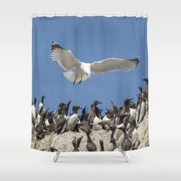 Seagull hovering over birds Shower Curtain