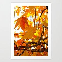 Autumn Leaves in New York City Art Print