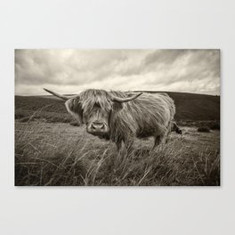 Moo Hair Canvas Print